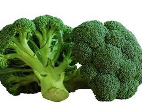 L'aliment de la semaine : le Brocoli